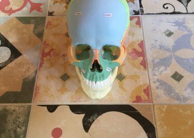 Schaedel-Nähte und Knochen